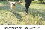 young man and dog playing with... | Shutterstock . vector #558239104