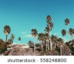 palm trees on a sunny day   Shutterstock . vector #558248800