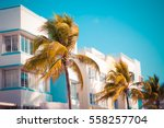 vintage tone image of palm... | Shutterstock . vector #558257704