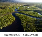 aerial view of a rainforest in