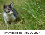 Stock photo kitten 558301834