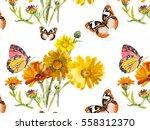 hand painting calendula flowers ... | Shutterstock . vector #558312370