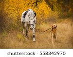 Stock photo dog brings white horse in autumn 558342970