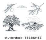 hand drawn olive collection.... | Shutterstock .eps vector #558380458