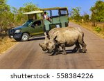 south africa. safari in kruger... | Shutterstock . vector #558384226