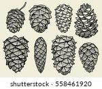 pine cones of cedar spruce fir... | Shutterstock .eps vector #558461920