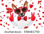 Jack Russell Dog Crazy And...