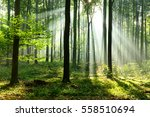 morning in the forest | Shutterstock . vector #558510694