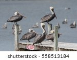 Multiple Pelicans Take Over Dock