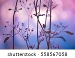 Stock photo flower of art 558567058