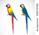vector of a parrot  macaws  on... | Shutterstock .eps vector #558570598