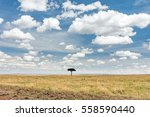 Silhouette Of Lone Tree In The...