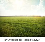 green meadow under blue sky... | Shutterstock . vector #558593224