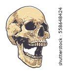 anatomic grunge skull vector... | Shutterstock .eps vector #558648424