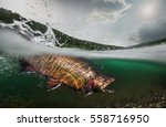 fishing. trout  underwater view. | Shutterstock . vector #558716950