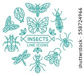 set of vector outline insects... | Shutterstock .eps vector #558724966