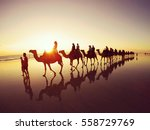 sunset camel safari along cable ... | Shutterstock . vector #558729769