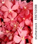 red  nice orchid | Shutterstock . vector #558732088