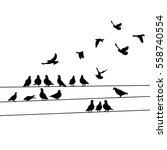 Silhouette Birds  Pigeons...