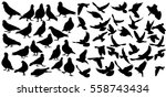 Vector Set Of Silhouette Birds...