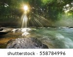 Sunlight Filters Through The...