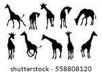 a giraffe animal silhouette set  | Shutterstock .eps vector #558808120