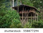 wild jungle  irian jaya  new... | Shutterstock . vector #558877294