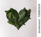 heart shape cutout with green... | Shutterstock . vector #558883639