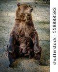 Sitting Bear