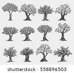 set of isolated olive trees... | Shutterstock .eps vector #558896503