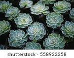 Rustic Macro Shot Of Cactus  ...