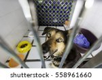 Homeless Dog Behind Bars In...