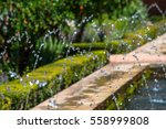 splashes of a fountain.  | Shutterstock . vector #558999808
