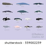 whales and dolphins set cartoon ...   Shutterstock .eps vector #559002259