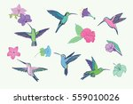 hummingbird vector pattern | Shutterstock .eps vector #559010026