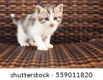 Stock photo adorable kittten 559011820