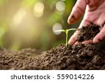 men hand are planting the... | Shutterstock . vector #559014226