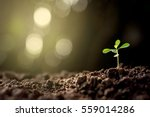 the seedlings are grown from... | Shutterstock . vector #559014286