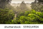 rainforest wiew from the canopy ... | Shutterstock . vector #559014904