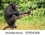 Chimpanzee Sanctuary  Game...