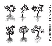 set black trees with roots.... | Shutterstock .eps vector #559051450