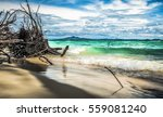 snag at the coastline of bamboo ... | Shutterstock . vector #559081240