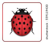 ladybug small icon. red lady... | Shutterstock .eps vector #559119430