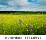 Field With Wild Flowers In The...