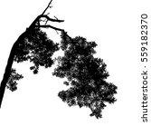 realistic pine branch tree... | Shutterstock .eps vector #559182370