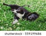 Happy Fluffy  Black Dog Lying...