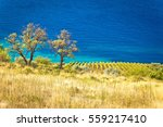 vineyard and beautiful coast by ...