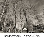 the trees during the winter in... | Shutterstock . vector #559238146