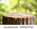 Empty Tree Trunk For Display...