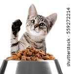 Cute kitten and bowl with dry food on white background